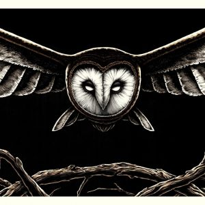 barn owl art print