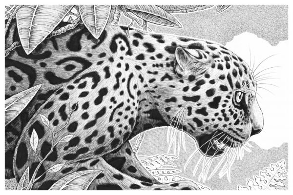 Jaguar Original
