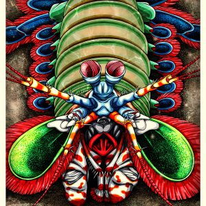Mantis Shrimp art print