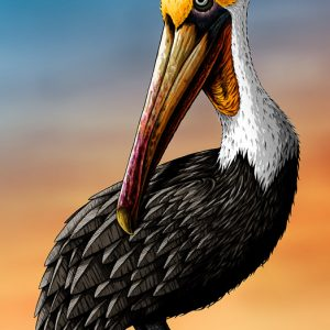 Pelican art print