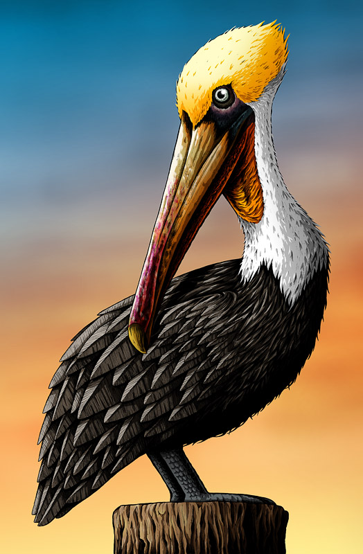 pelican art print by nicholas ivins bird art