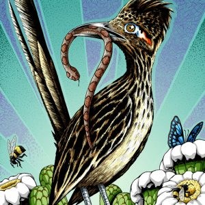 Roadrunner art print